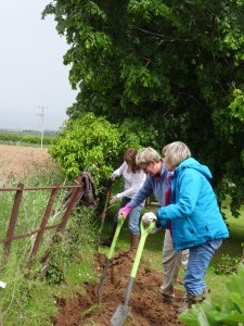 Hedge Planting Party June 2015